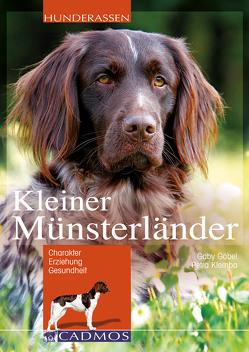 Kleiner Münsterländer von Goebel,  Gaby