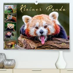 Kleiner Panda (Premium, hochwertiger DIN A2 Wandkalender 2021, Kunstdruck in Hochglanz) von Roder,  Peter
