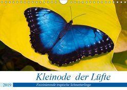 Kleinode der Lüfte – Faszinierende tropische Schmetterlinge (Wandkalender 2019 DIN A4 quer) von Maywald,  Armin