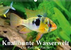 Knallbunte Wasserwelt. Die Welt der Fische (Wandkalender 2019 DIN A3 quer)