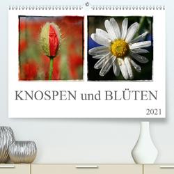 Knospen und Blüten (Premium, hochwertiger DIN A2 Wandkalender 2021, Kunstdruck in Hochglanz) von SchnelleWelten