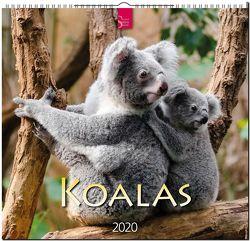 Koalas von Redaktion Verlagshaus Würzburg,  Bildagentur