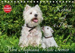 Kobold auf 4 Pfoten – West Highland White Terrier (Tischkalender 2019 DIN A5 quer) von Starick,  Sigrid