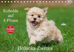 Kobolde auf 4 Pfoten – Bolonka Zwetna (Tischkalender 2019 DIN A5 quer) von Starick,  Sigrid
