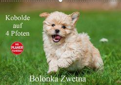 Kobolde auf 4 Pfoten – Bolonka Zwetna (Wandkalender 2019 DIN A2 quer) von Starick,  Sigrid