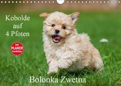 Kobolde auf 4 Pfoten – Bolonka Zwetna (Wandkalender 2019 DIN A4 quer) von Starick,  Sigrid