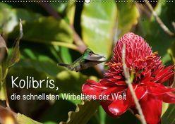 Kolibris, die schnellsten Wirbeltiere der Welt (Wandkalender 2019 DIN A2 quer) von M.Polok