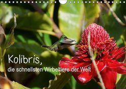 Kolibris, die schnellsten Wirbeltiere der Welt (Wandkalender 2019 DIN A4 quer) von M.Polok