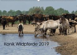 Konik Wildpferde 2019 (Wandkalender 2019 DIN A2 quer) von Gauger,  Jenny