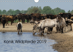 Konik Wildpferde 2019 (Wandkalender 2019 DIN A4 quer) von Gauger,  Jenny