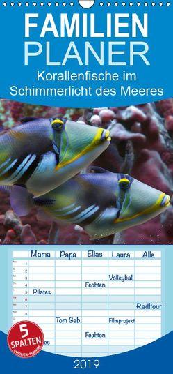 Korallenfische im Lichtschimmer des Meeres – Familienplaner hoch (Wandkalender 2019 , 21 cm x 45 cm, hoch) von Schmidbauer,  Heinz