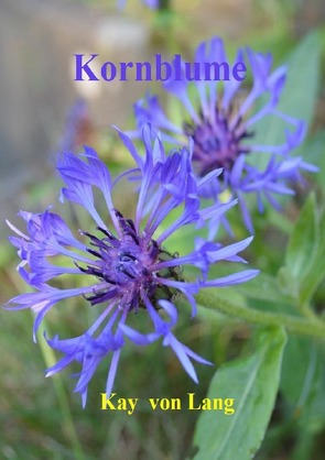 Kornblume von von Lang,  Kay