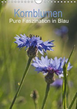 Kornblumen – Pure Faszination in Blau / Planer (Wandkalender 2019 DIN A4 hoch) von Potratz,  Andrea