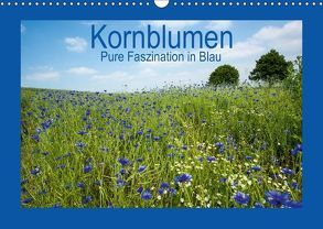 Kornblumen – Pure Faszination in Blau (Wandkalender 2018 DIN A3 quer) von Potratz,  Andrea