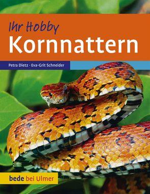 Kornnattern von Dietz,  Petra, Schneider,  Eva-Grit