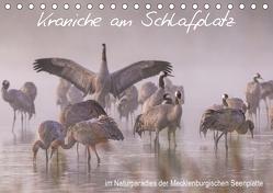 Kraniche am Schlafplatz – im Naturparadies der Mecklenburgischen Seenplatte (Tischkalender 2019 DIN A5 quer) von Pretzel - FotoPretzel,  André