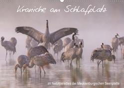 Kraniche am Schlafplatz – im Naturparadies der Mecklenburgischen Seenplatte (Wandkalender 2019 DIN A2 quer) von Pretzel - FotoPretzel,  André