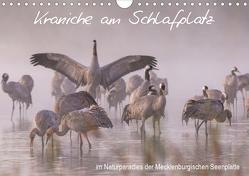 Kraniche am Schlafplatz – im Naturparadies der Mecklenburgischen Seenplatte (Wandkalender 2019 DIN A4 quer) von Pretzel - FotoPretzel,  André