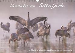 Kraniche am Schlafplatz – im Naturparadies der Mecklenburgischen Seenplatte (Wandkalender 2020 DIN A3 quer) von Pretzel - FotoPretzel,  André