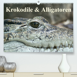 Krokodile & Alligatoren (Premium, hochwertiger DIN A2 Wandkalender 2021, Kunstdruck in Hochglanz) von Stanzer,  Elisabeth