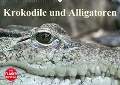 Krokodile und Alligatoren (Wandkalender 2019 DIN A2 quer) von Stanzer,  Elisabeth