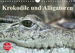 Krokodile und Alligatoren (Wandkalender 2019 DIN A4 quer) von Stanzer,  Elisabeth