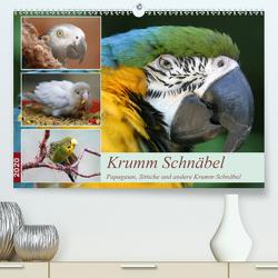 Krumm Schnäbel – Papageien, Sittiche und andere Krumm Schnäbel (Premium, hochwertiger DIN A2 Wandkalender 2020, Kunstdruck in Hochglanz) von Mielewczyk,  Barbara