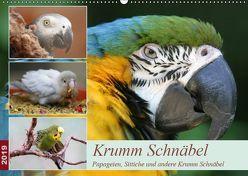 Krumm Schnäbel – Papageien, Sittiche und andere Krumm Schnäbel (Wandkalender 2019 DIN A2 quer) von Mielewczyk,  Barbara