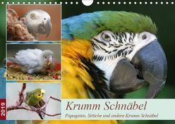 Krumm Schnäbel – Papageien, Sittiche und andere Krumm Schnäbel (Wandkalender 2019 DIN A4 quer) von Mielewczyk,  Barbara