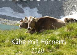 Kühe mit Hörnern (Wandkalender 2020 DIN A2 quer) von Goldscheider,  Stefanie
