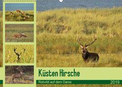 Küsten Hirsche – Rotwild auf dem Darss (Wandkalender 2019 DIN A2 quer) von Schaack,  René