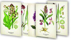 """Kunstklappkarten """"Zauberhafte Orchideen"""" von Quelle & Meyer Verlag"""