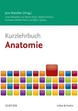 Kurzlehrbuch Anatomie von Koch,  Marco, Kürten,  Stefanie, Schulze-Tanzil,  Gundula, Spittau,  Björn, Waschke,  Jens