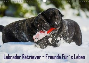 Labrador Retriever – Freunde für´s Leben (Wandkalender 2018 DIN A3 quer) von Starick,  Sigrid