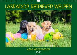 Labrador Retriever Welpen – Kleine Weltentdecker (Wandkalender 2021 DIN A3 quer) von Starick,  Sigrid