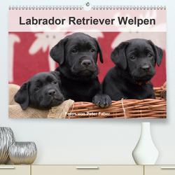 Labrador Retriever Welpen (Premium, hochwertiger DIN A2 Wandkalender 2020, Kunstdruck in Hochglanz) von Faber,  Peter
