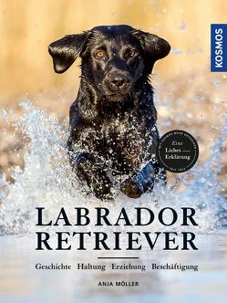 Labrador Retriever von Möller,  Anja