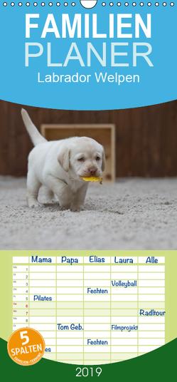 Labrador Welpen – Familienplaner hoch (Wandkalender 2019 , 21 cm x 45 cm, hoch) von Bollich,  Heidi