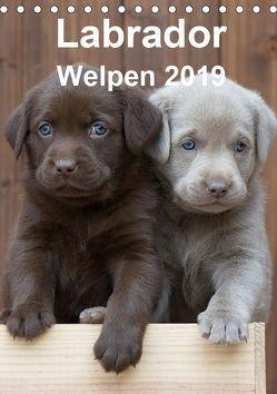 Labrador Welpen (Tischkalender 2019 DIN A5 hoch) von Bollich,  Heidi