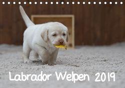 Labrador Welpen (Tischkalender 2019 DIN A5 quer) von Bollich,  Heidi