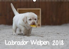Labrador Welpen (Wandkalender 2018 DIN A3 quer) von Bollich,  Heidi