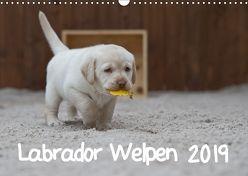 Labrador Welpen (Wandkalender 2019 DIN A3 quer) von Bollich,  Heidi