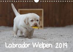 Labrador Welpen (Wandkalender 2019 DIN A4 quer) von Bollich,  Heidi