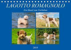 Lagotto Romagnolo – Ein Hund zum Verlieben (Tischkalender 2019 DIN A5 quer) von N.,  N.
