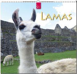 Lamas von Redaktion Verlagshaus Würzburg,  Bildagentur