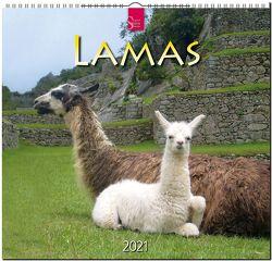 Lamas