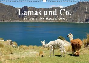 Lamas und Co. Familie der Kameliden (Wandkalender 2019 DIN A3 quer) von Stanzer,  Elisabeth