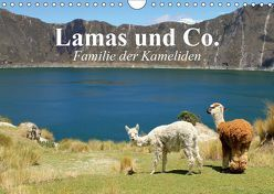 Lamas und Co. Familie der Kameliden (Wandkalender 2019 DIN A4 quer) von Stanzer,  Elisabeth