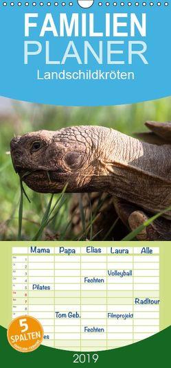 Landschildkröten – Familienplaner hoch (Wandkalender 2019 , 21 cm x 45 cm, hoch) von Sixt,  Marion