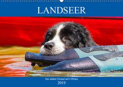 Landseer – Ein starker Freund auf 4 Pfoten (Wandkalender 2019 DIN A2 quer) von Starick,  Sigrid